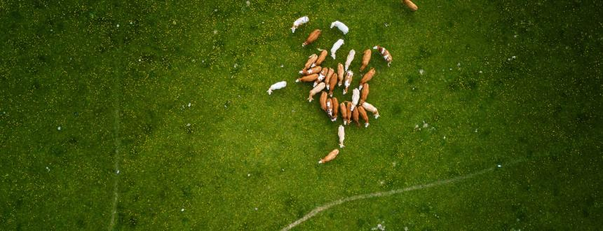 Casos de éxito de la Inteligencia Artificial aplicada en el Agro